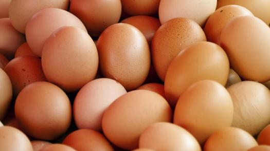 3017188-poster-1280-eggs